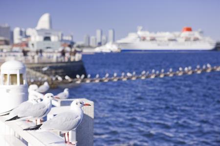 passenger ships: Seagull and passenger ships Stock Photo