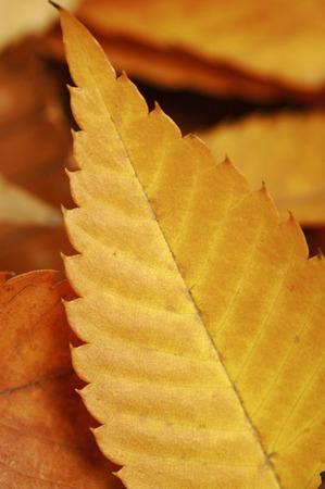 vertical orientation: Fallen leaves