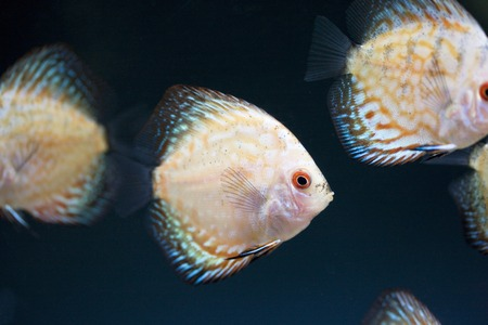 fish breeding: Disqus Stock Photo