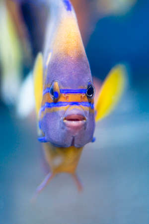 fish breeding: Wanukeyakko Stock Photo