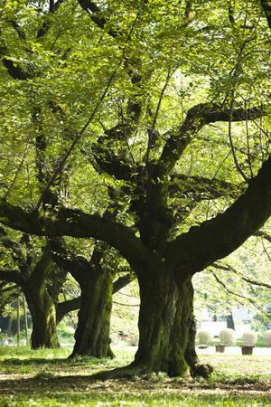 metropolitan: Tokyo Metropolitan KOGANEI Park