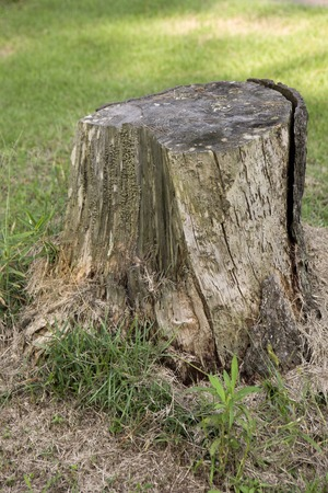 disconnection: Stump