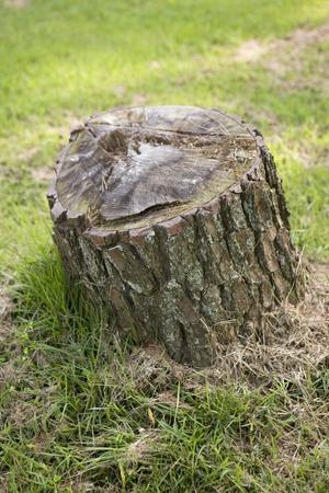 severance: Stump