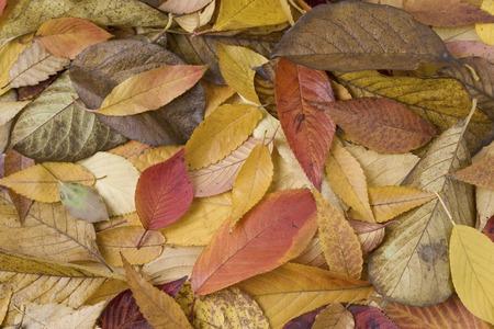 Herbstblätter Standard-Bild - 40158453