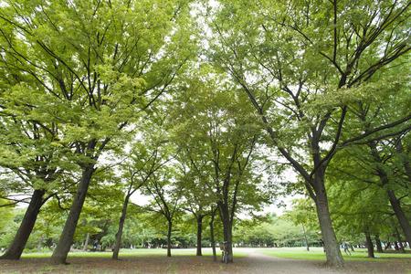 fining: Grove park