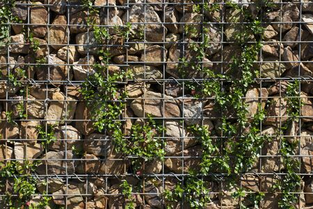 greening: Stone wall that was greening