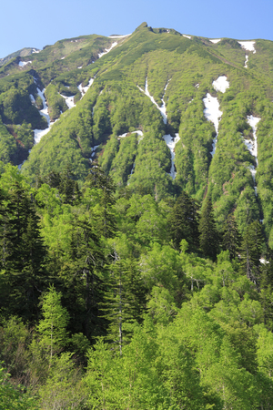 lingering: Mountains and fresh green