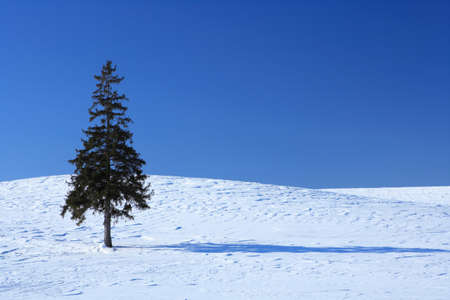 snowscape: One tree