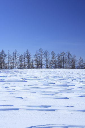 snowy field: Snowy field and forest