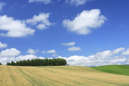 town idyll: Wheat fields and blue sky Stock Photo