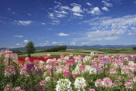 landscape flowers: Flower Hill Stock Photo