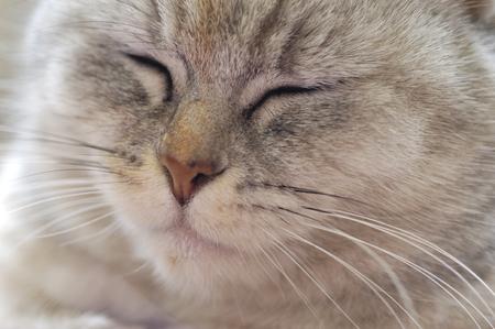part of me: CAT
