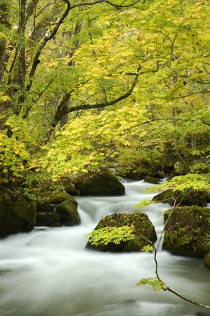 far eastern: Oirase stream
