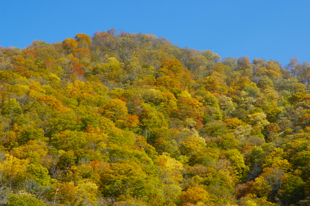 mountainside: Mountainside and blue sky of autumn leaves Stock Photo