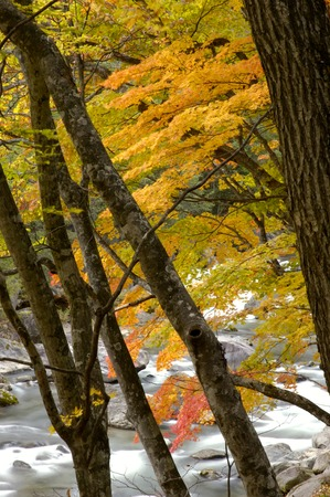 far eastern: Autumn leaves and flow