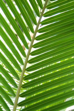coolness: Palm leaves