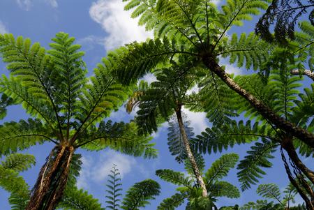 subtropical: Subtropical plant