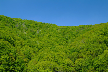 far eastern: Fresh green leaves and blue sky