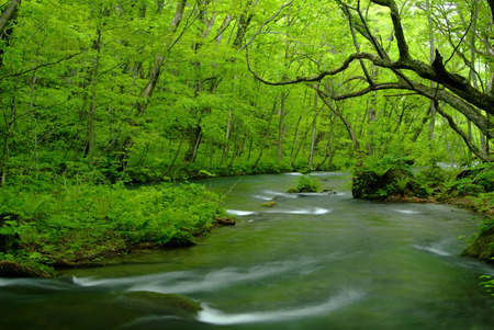 a bathing place: Oirase stream
