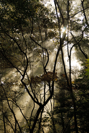 the color of silence: Sunbeams Stock Photo