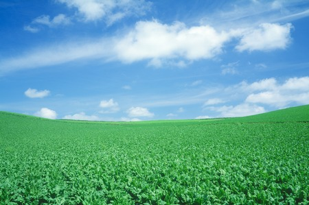 grandeur: Field and blue sky beat field Stock Photo