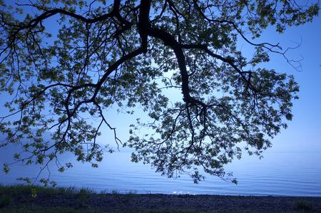 lakeside: Lakeside morning