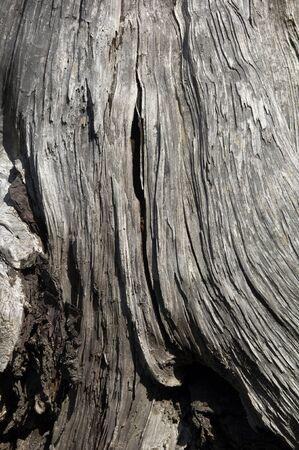 spunk: Trees