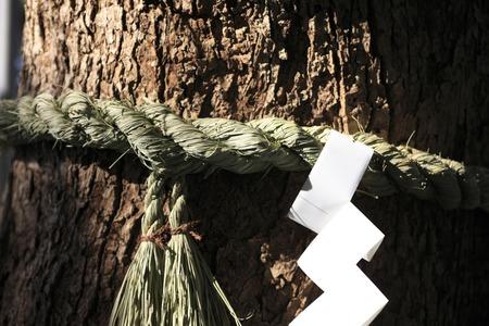 enclosing: Sacred tree Archivio Fotografico