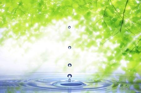 refrescar: Frescas hojas verdes y gota de agua