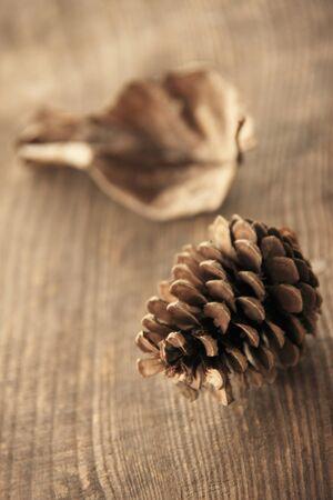 pinecone: Pinecone Stock Photo