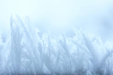 the natural phenomena: Frost Stock Photo