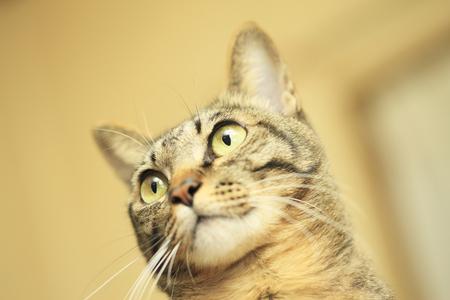 日本の猫 写真素材 - 47148566