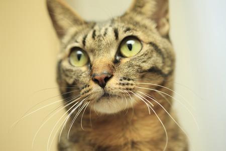 日本の猫 写真素材 - 47148575