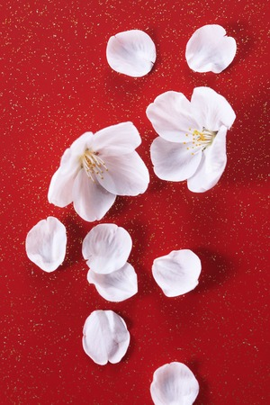 harmonize: Cherry Japanesestyle image