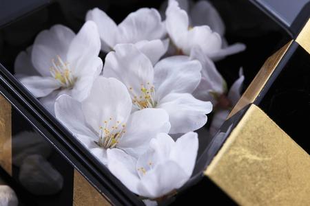 harmonize: Cherry blossoms and Japanese plates Stock Photo