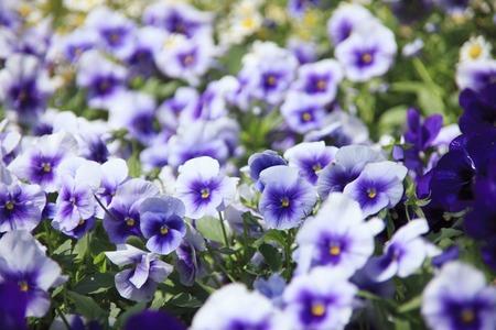 bushy plant: The flower garden
