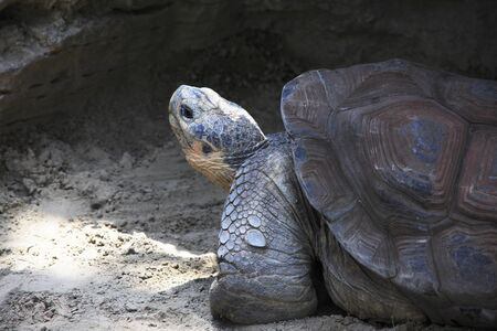 galapagos: Galapagos giant tortoise Stock Photo