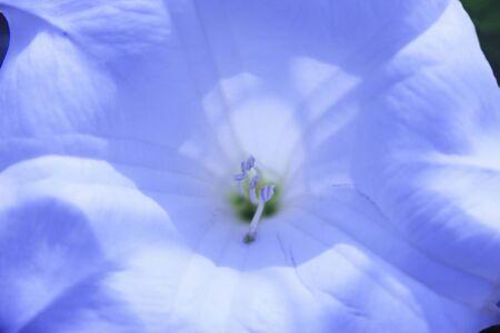 花びら: 花の花弁
