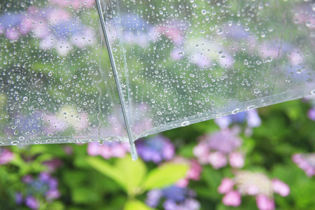 Hydrangeas and umbrellas Stockfoto