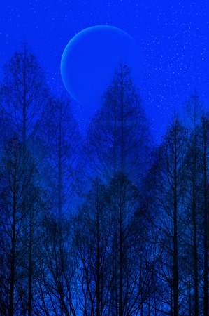 synthesis: Moon and trees Stock Photo