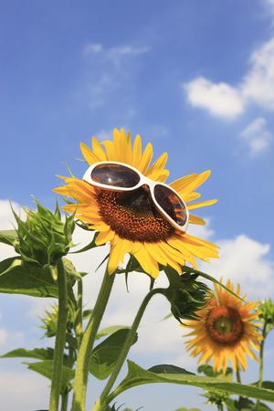 Zonnebloem en zonnebril Stockfoto