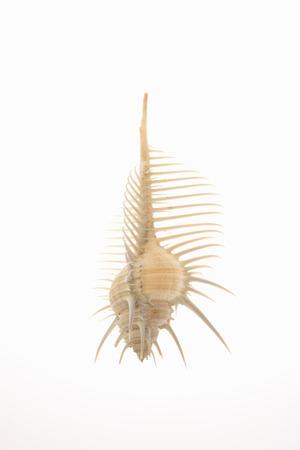 hone: Hone shellfish