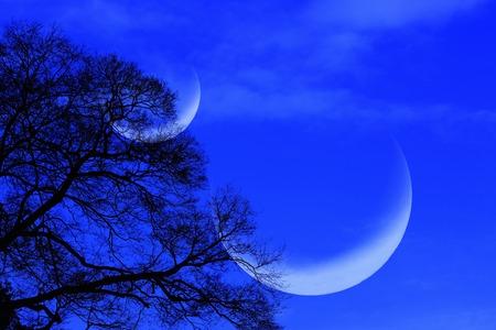 toter baum: Mond und toter Baum