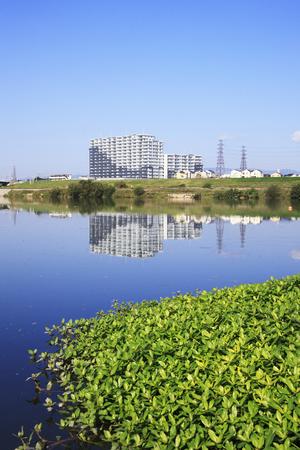 waterweed: Waterweed of Yodogawa