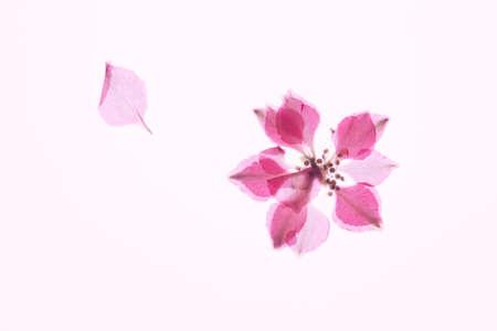 floret: Pressed flowers floret Stock Photo