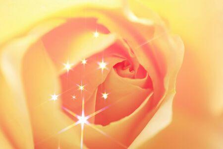 radiancy: Sparkling rose