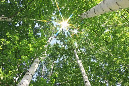 radiancy: Birch