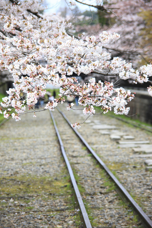 incline: Keage incline cherry blossoms Stock Photo