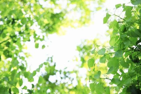 Leaf of the fresh green 版權商用圖片 - 39980428