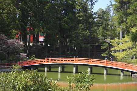 arcuate: Arched bridge